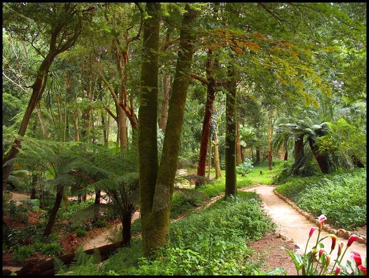 Feteira da Rainha no Parque da Pena em Sintra