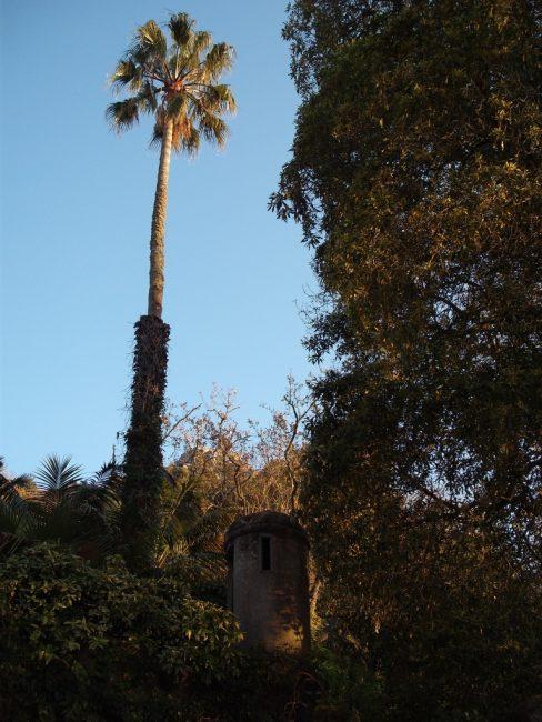 Quinta da Amizade - jardim
