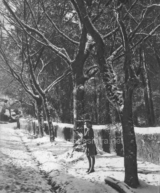Neve em Sintra em 30 jan 1945 3 A Neve em Sintra