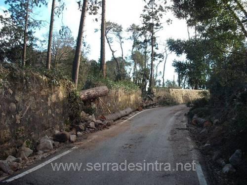 Ciclone de 19 01 2013 na Serra de Sintra 13 Ciclone de 19-01-2013
