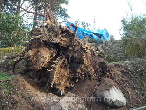 Ciclone de 19 01 2013 na Serra de Sintra 26 Ciclone de 19-01-2013