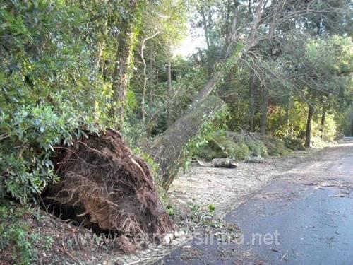 Ciclone de 19 01 2013 na Serra de Sintra 27 Ciclone de 19-01-2013