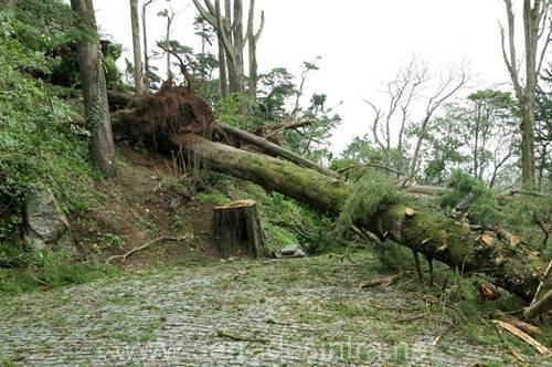 Ciclone de 19 01 2013 na Serra de Sintra 30 Ciclone de 19-01-2013