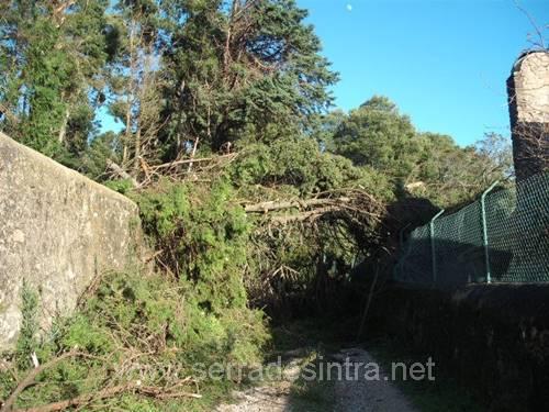 Ciclone de 19 01 2013 na Serra de Sintra 4 Ciclone de 19-01-2013